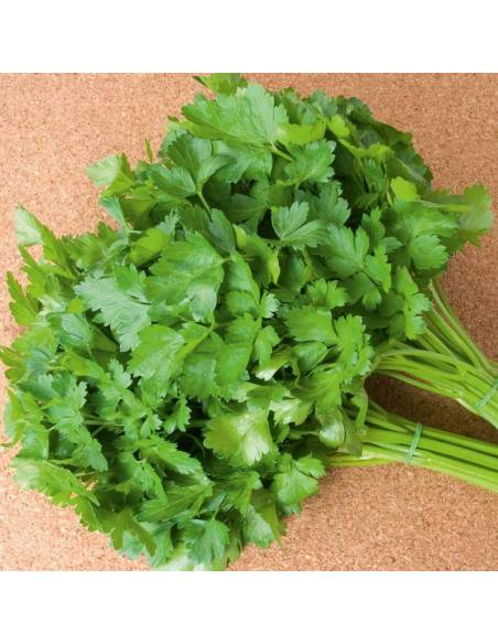 Salsa Einfach schmitt sementes biológicas