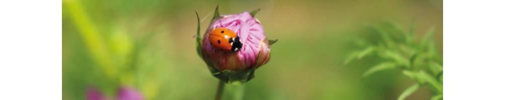 Flores | Comprar Semillas Ecológicas | Semillas Vivas