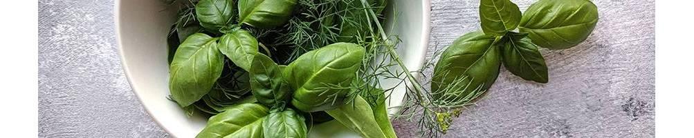 Aromáticas | Comprar Semillas Ecológicas | Semillas Vivas